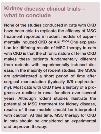 stem cell CKD